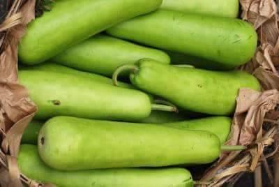 Indian summer vegetable Dudhi (bottle gourd)