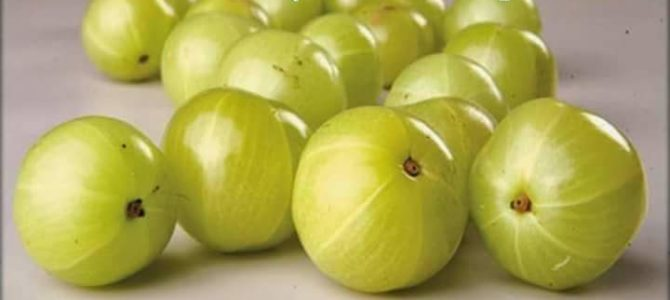 Amla (Indian Gooseberry )