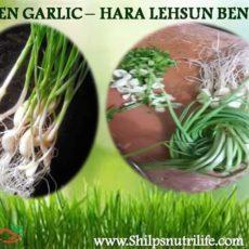 Green garlic (Hara lehsun)