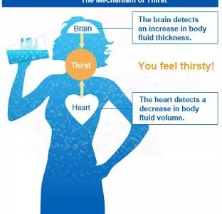 Thirsty? you are already dehydrated