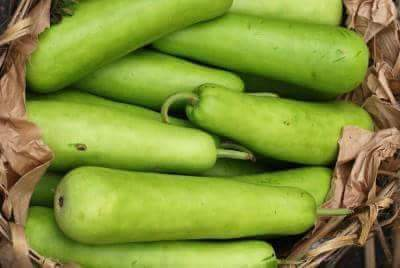 Indian summer vegetable Dudhi (bottle gourd)