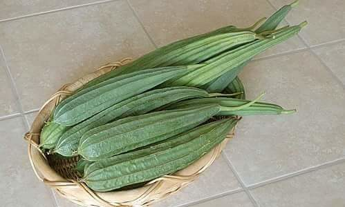 Indian summer vegetable – RIDGED GOURD (TORI, TURAI)